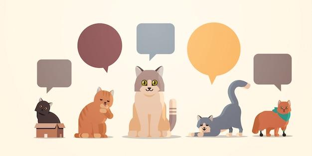Niedliche katzen mit bunten chat-blasen-sprachikonen flauschige entzückende cartoon-tiere inländische kitty-heimtierkonzept-ebene flach in voller länge horizontal