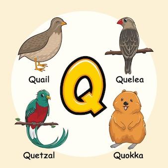 Niedliche tiere alphabet buchstabe q.