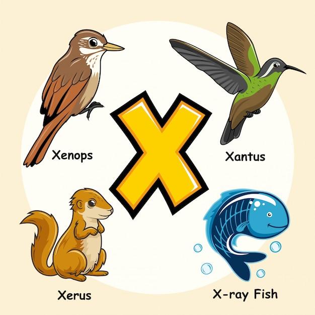 Niedliche tiere alphabet buchstabe x. Premium Vektoren