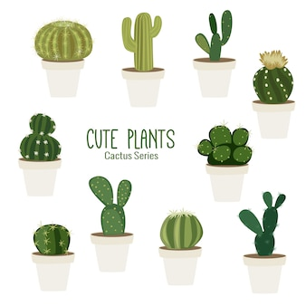 Niedliche tropische kaktuspflanzen