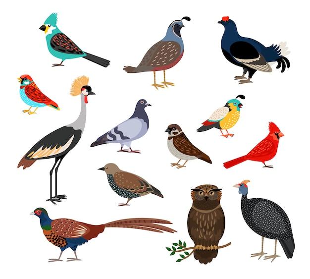 Niedliche vögel