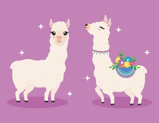 Niedliche zwei exotische tiere der alpakas mit illustrationsdesign der blumendekorationszeichen