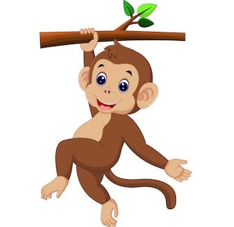 Niedlicher Affe