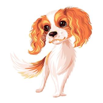 Niedlicher lächelnder hund cavalier king charles spaniel rasse