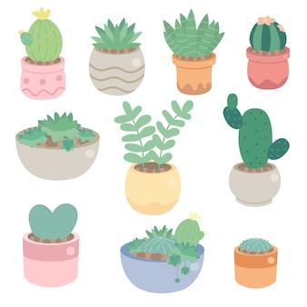 Niedlicher minimaler kaktus und succulent in der topfsammlung