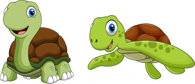 Niedlicher schildkröte-cartoon