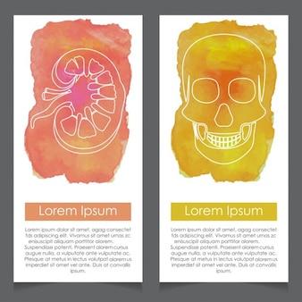 Nieren-und schädel-aquarell-karte vorlage