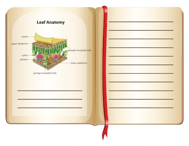 Notizbuch- und blattanatomie auf seite