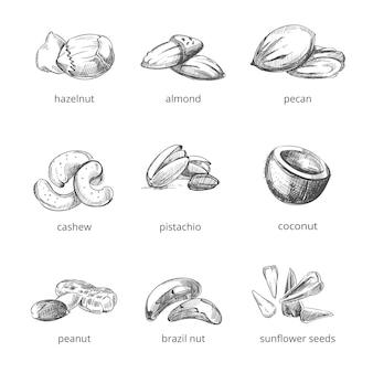 Nüsse in hand gezeichneten stil festgelegt