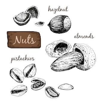 Nüsse. reihe von illustrationen.