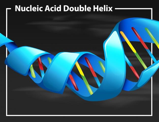 Nukleinsäure-doppelhelix