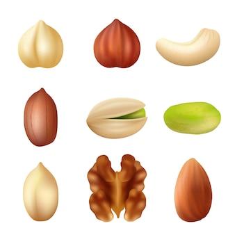 Nusssammlung. gesunde erdnusskrümelvektor-landwirtschaftsbild der getrockneten cashewnüsse der naturnahrung