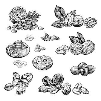 Nussskizzenillustration gravurstil. handgezeichnete nüsse walnuss haselnuss cashew erdnuss mandel pistazie pinienkerne