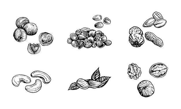 Nussskizzenillustration. handgezeichnete nüsse der gravurart walnuss-haselnuss-cashew-erdnuss-mandel-pinienkerne