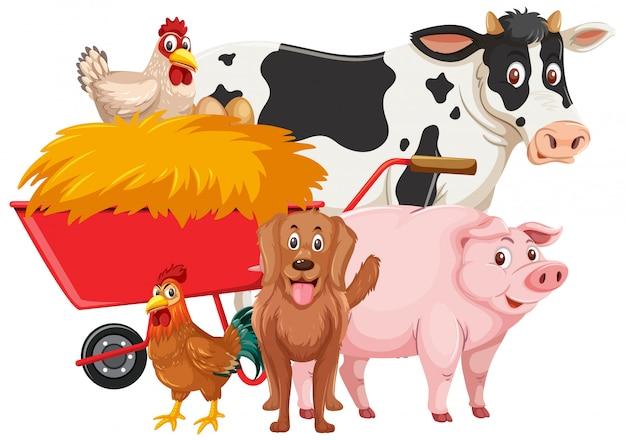 Nutztiere auf weißem hintergrund
