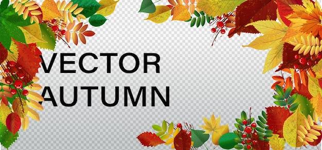 Oak leaf grenze abstrakten hintergrund saisonale vektor-illustration herbstsaison spezifische grenze vektor hintergrund. eiche herbstlaub auf weiß.