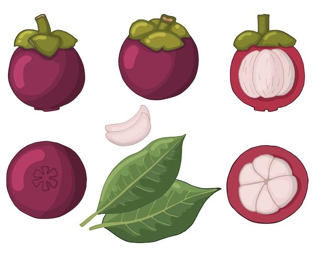 Objekte isoliert. mangustin in verschiedenen formen: ganz, geschält, fleisch.