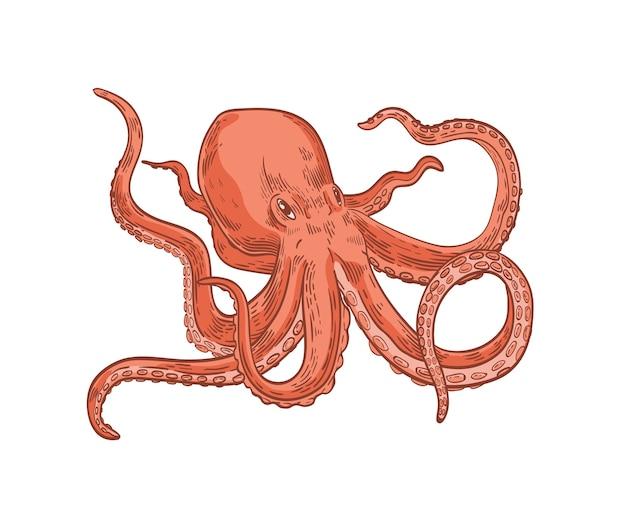 Octopus bewegt seine tentakel
