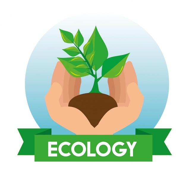 Ökologieanlage mit blättern und boden in den händen