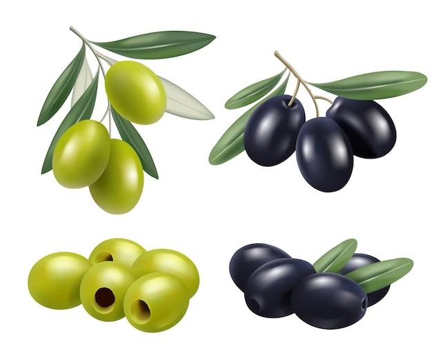 Olive realistisch. griechische naturkost olivenzweige entspannen spa-öl-symbole.