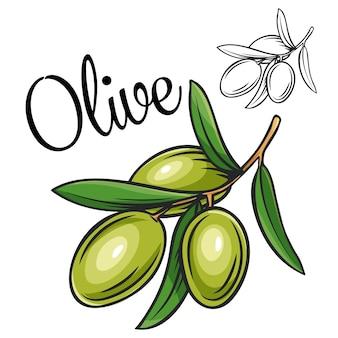 Olive zeichnungsikone