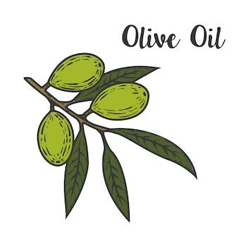 Olivenöl abbildung. element für logo, etikett, emblem, zeichen, poster. illustration.