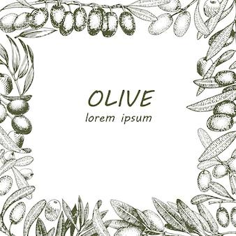 Olivgrüner baumzweig-vektorrahmen. hand gezeichnete art des stiches. vektorweinleseillustrationen