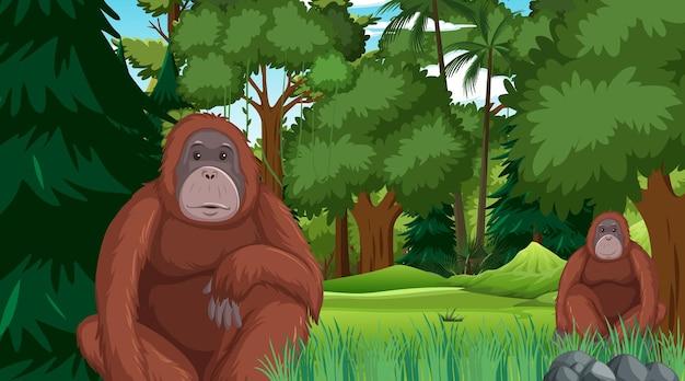 Orang-utan in der wald- oder regenwaldszene mit vielen bäumen