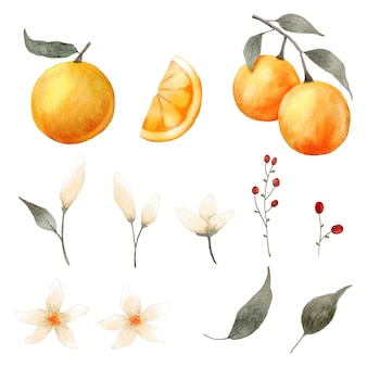 Orange element sammlung aquarell