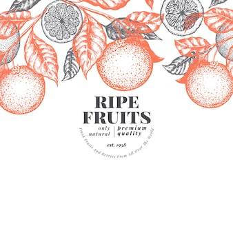 Orange frucht designvorlage. hand gezeichnete vektorfruchtillustration. graviertes banner. retro zitrusfrüchte hintergrund.
