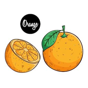 Orange fruchtillustration mit farbiger skizzenart