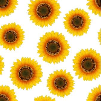 Orange gelbe sonnenblume nahtlos auf weißem hintergrund.