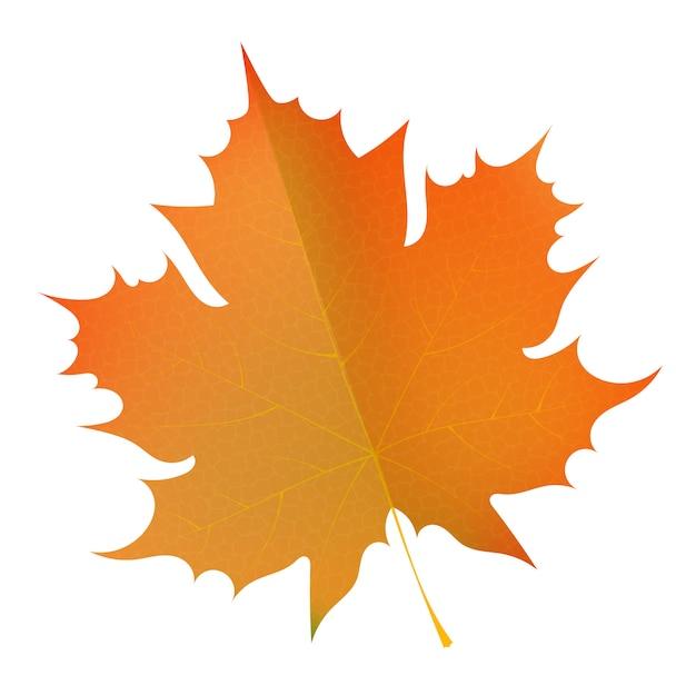 Orange herbstahornblatt. symbol des herbstes. das konzept des jahreszeitenwechsels