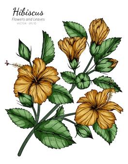 Orange hibiskusblumen- und blattzeichnungsillustration mit strichzeichnungen auf weiß.