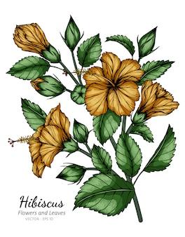 Orange hibiskusblumen- und blattzeichnungsillustration mit strichzeichnungen auf weißem hintergrund.