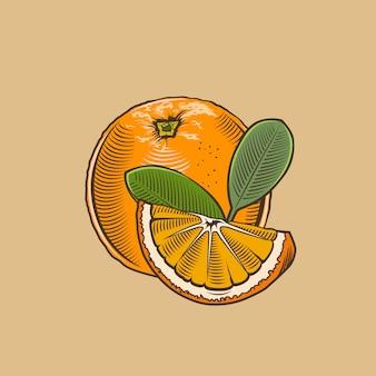 Orange im vintage-stil. farbige vektorabbildung