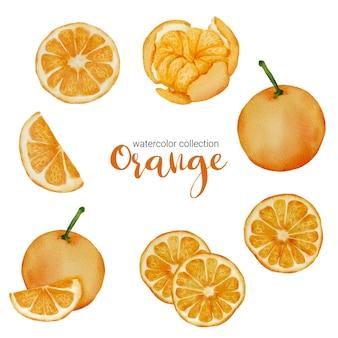 Orange in fruchtaquarellsammlung, voller früchte und scheiben und in zwei hälften geschnitten