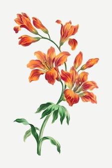 Orangefarbener lilien-vektor-vintage-blumen-kunstdruck, remixed aus kunstwerken von john edwards