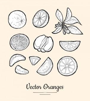 Orangen isoliert. ganze, gehackte orange, scheiben, blüten, blätter. hand gezeichneter satz der fruchtsammlung. trendiges essen