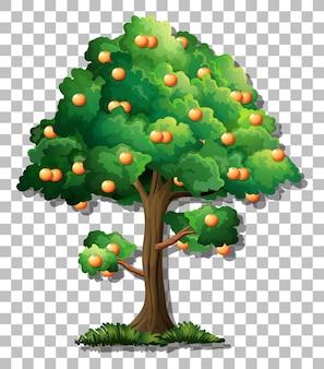 Orangenbaum auf transparentem hintergrund