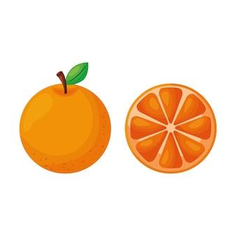 Orangenfruchtvektor