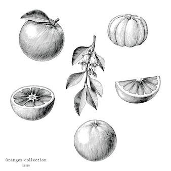 Orangensammlung hand zeichnen weinlese lokalisiert auf weißem hintergrund
