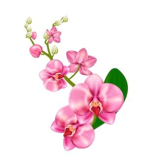 Orchidee im realistischen stil in rosa farbe, isoliert auf weißem hintergrund. phalaenopsis, blüte, zimmerpflanze. vektor-illustration