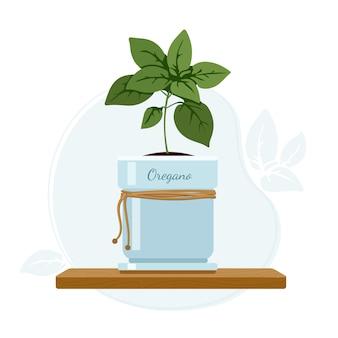 Oregano oder süße majoran blühende pflanze im einmachglas auf küchenfensterbank. kulinarische und nahrungsergänzungsmittel kräuter.
