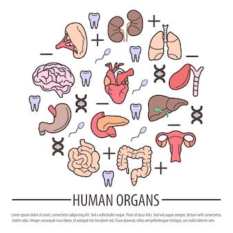 Organe des menschen mit dna-teilen