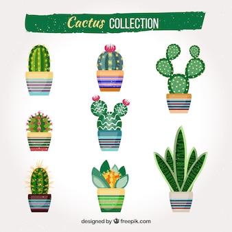 Original pack von flachen kaktus