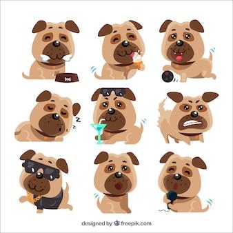 Original vielfalt der lustigen pugs