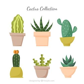 Original vielfalt von flachen kaktus