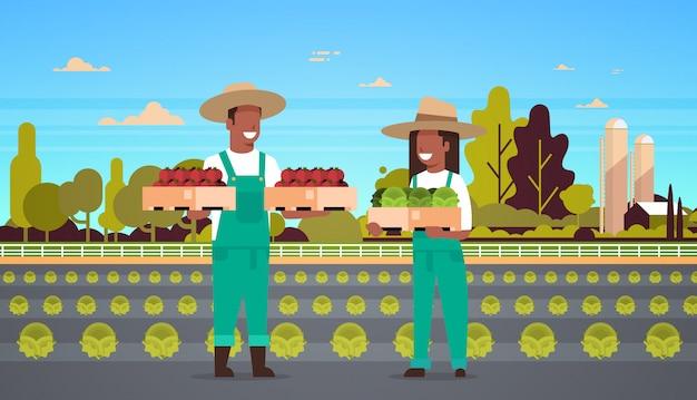 Paar bauern, die kisten mit roten grünen tomaten halten, mann, frau, die gemüse erntet, öko-landwirtschaftskonzept ackerland feld landschaftslandschaft in voller länge horizontal