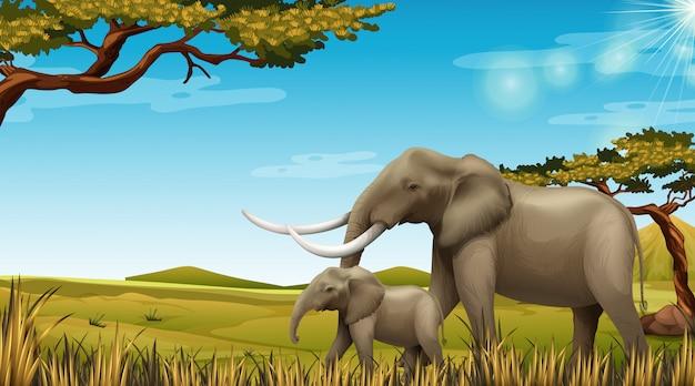 Paar elefanten in der naturszene